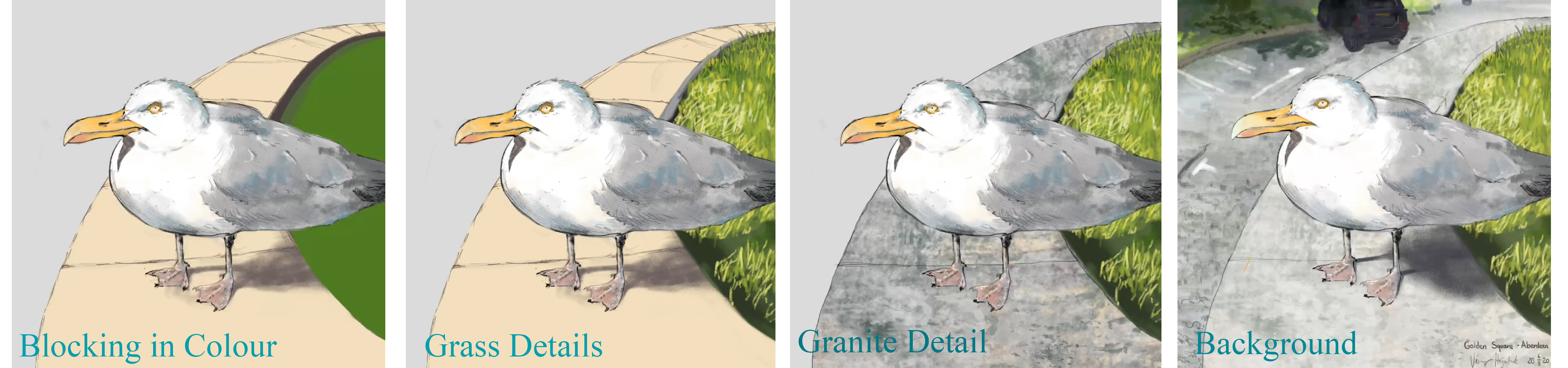 process of drawing the gull