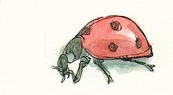 ladybug marienkaefer
